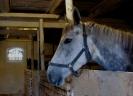 Nasze konie